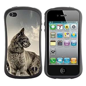 "Pulsar iFace Series Tpu silicona Carcasa Funda Case para Apple iPhone 4 / iPhone 4S , Gato de Pelo Corto Casa Mascota Azul Gris lindo gatito"""
