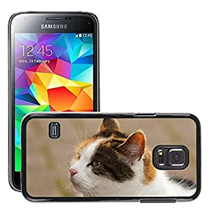 Hot Style Cell Phone PC Hard Case Cover // M00111476 Cat Head Portrait Three Coloured // Samsung Galaxy S5 MINI SM-G800