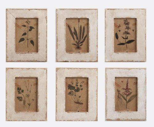 Vi Framed Print Set (Napa Home & Garden Framed Botanical Prints, Set of 6)