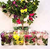 Reusable Gel Wax Candles with Roses in Variety of Colors