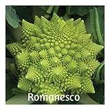 Romanesco Organic Heirloom Cauliflower Seeds 100 Plus by BluSeeds