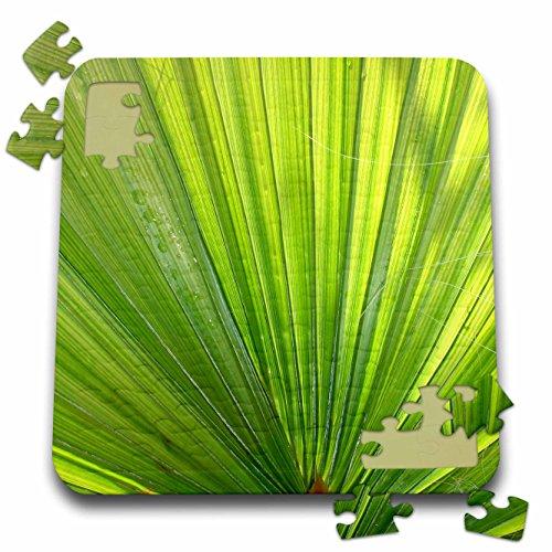 Taiche - Photography - Palms - Fan of Na - Sukkot Jigsaw Shopping Results