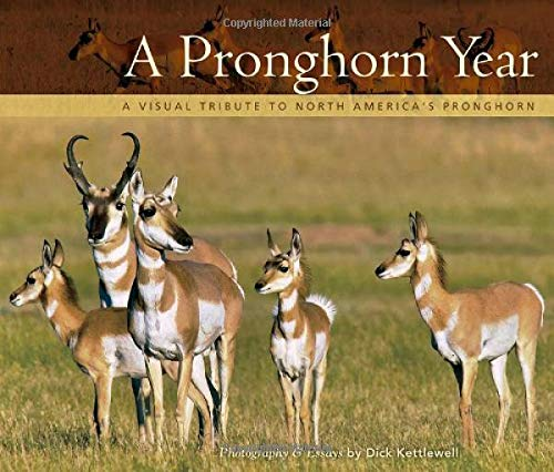Our prairies, plains, and rangelands would be empty landscapes without the supremely adapted pronghorn. In A Pronghorn Year: A Visual Tribute to North America's Pronghorn, Dick Kettlewell beautifully captures this animal's amazing speed, eight-power ...
