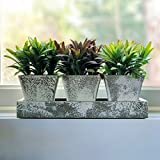 The Realistic Faux Plant Trio Centerpiece, 3 Potted Plants Plus Tray, 4 Piece Set, Stone Finish, Green and Purple Leaves, 9 3/4 Inches Long, By Whole House Worlds