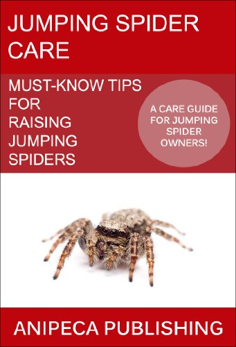 Jumping Spider Care: Must-Know Tips For Raising Jumping Spiders -