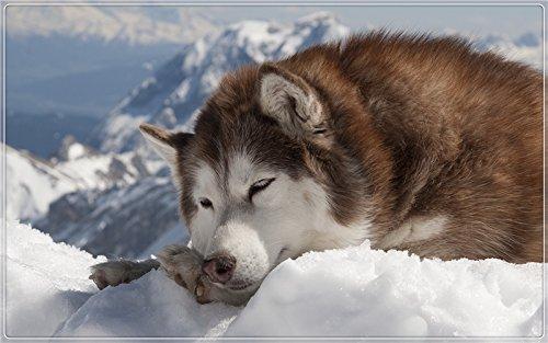 Malamute Sled - Alaskan Malamute Anatolian Shepherd Alaska sled dogs Furniture & Decorations magnet fridge magnets