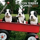 Boston Terrier Puppies 2013 Calendar