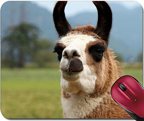 Liili Mousepad IMAGE ID: 19146980 Smiling Llama Here s Looking at You (929 Dining Set)