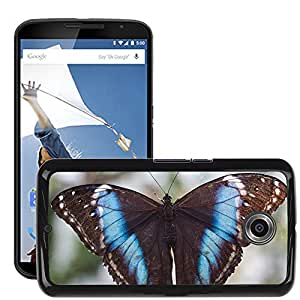Super Stella Slim PC Hard Case Cover Skin Armor Shell Protection // M00145164 Butterfly Exotic Tropics Tropical // LG Google Nexus 6