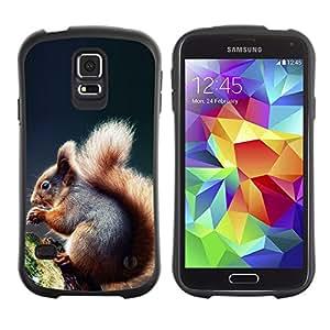 Paccase / Suave TPU GEL Caso Carcasa de Protección Funda para - Cool Squirrel - Samsung Galaxy S5 SM-G900