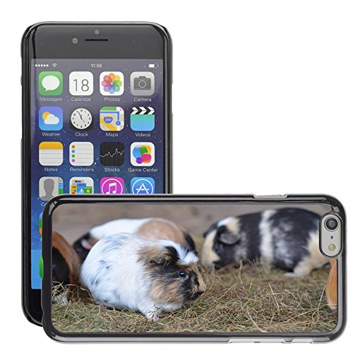 "Bild Hart Handy Schwarz Schutz Case Cover Schale Etui // M00133446 Guinea Pig Zoo Süßes // Apple iPhone 6 PLUS 5.5"""