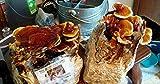 Mushroom Man LLC, Reishi Mushroom Kit - Indoor Mushroom...