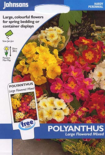 johnsons pictorial Pack  Flower  Polyanthus Large Flowered Mixed  100 Seeds