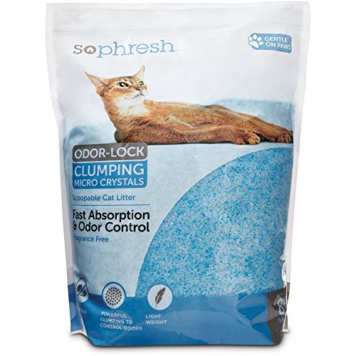 Top 10 Best Non Tracking Cat Litter Brands Catvills
