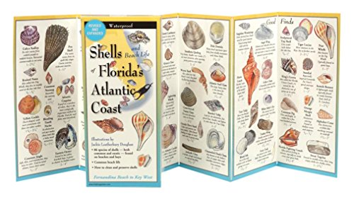 - Shells of Florida's Southeastern Coast: Folding Guide (Foldingguides)