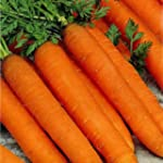 Premier Seeds Direct CAR22 Carrot Res...