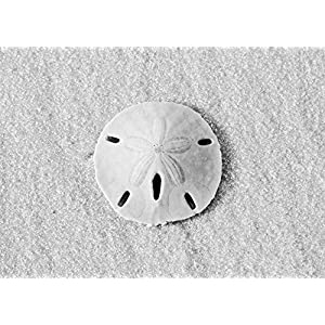 51IhoxmTCRL._SS300_ Best Sand Dollar Wall Art and Sand Dollar Wall Decor For 2020