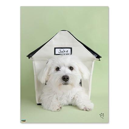Amazon com: Graphics and More Bichon Frise Maltese Puppy Dog