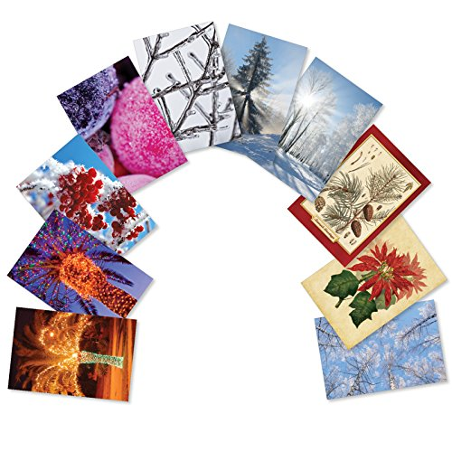 10 Boxed Christmas Flora Assorted Merry Christmas Cards w/ Envelopes - Featuring Majestic and Beautiful Plants and Snow Covered Trees in the Winter Happy Holidays and Season Greetings A5563XSG-B1x10 - Envelopes Snow Tree Boxed