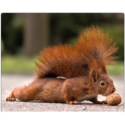 «(motif écureuil et noix 23): edition colibri tapis de souris en caoutchouc motif hibou très résistant à la déchirure fond adhérent adapté à tous les types de sour