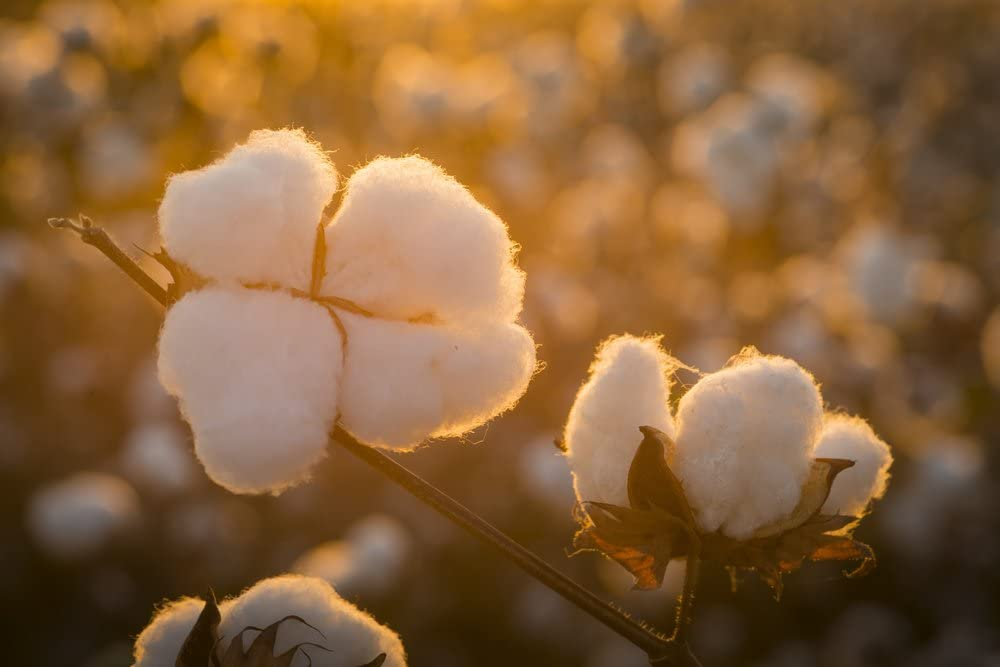 1lb Grown in the USA Raw Cotton Stuffing//Batting.