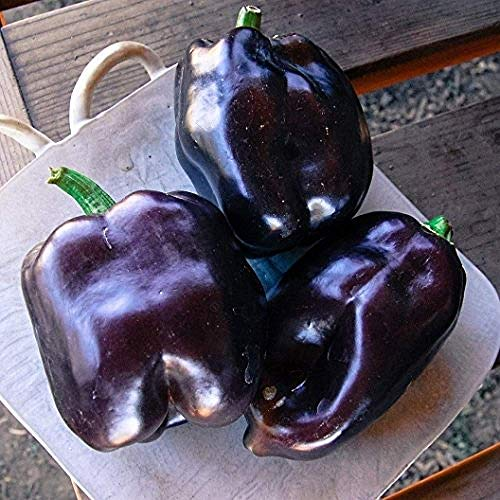 (David's Garden Seeds Pepper Bell Purple Beauty SL4614 (Purple) 50 Non-GMO, Organic Seeds)