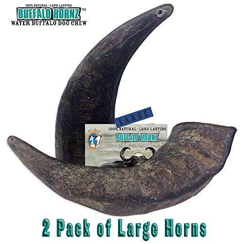 - 2 Pack of Buffalo Hornz Large Long Lasting 100% Natural Water Buffalo Horn Dog Chews