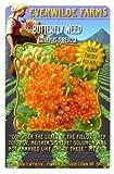 Everwilde Farms - Butterfly Weed Native Wildflower Seeds - Jumbo Seed Packet (80)