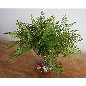 """Lily Garden 12"""" Artificial Soft Plastic Maidenhair Fern - Package of 6 3"""