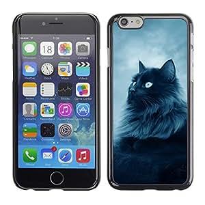 Be Good Phone Accessory // Dura Cáscara cubierta Protectora Caso Carcasa Funda de Protección para Apple Iphone 6 // Cat Furry Long Hair Grey Blue Eyes Feline