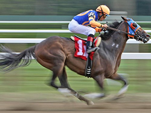 Horse Races and Stock Markets