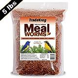 TradeKing 100% Natural Dried Mealworms Wild Birds, Chicken, Fish, Reptiles - Bulk Mealworms (5lb Mealworms) Bird Food, Chicken Treats, Hen Treats