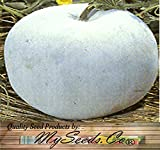 buy Winter Melon Round, Wax Gourd SEEDS - Tong Qwa - Very Popular In Asian Soup Dishes - 15 to 20+ LBs - Approx. 85 - 100 Days - By MySeeds.Co (10 Seeds - Pkt. Size) now, new 2018-2017 bestseller, review and Photo, best price $5.55