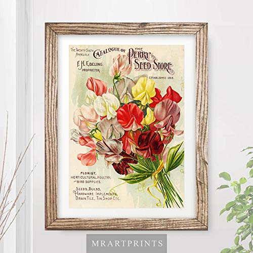 (VINTAGE SWEETPEA FLOWERS FLORAL ADVERTISING ART PRINT Shabby Chic Home Decor Victorian Illustration Painting Wall Picture A4 A3 A2 (10 Sizes))