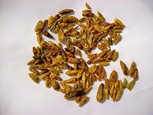 Peri-Peri or Pili Pili Hot Pepper 10+ seeds