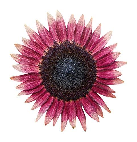 (Burpee Ms. Mars Sunflower Seeds 50 seeds )