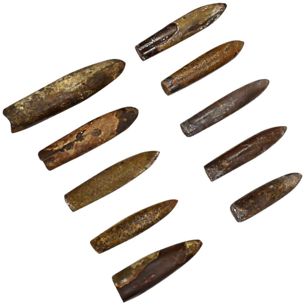 BALUUE10PCS BELEMNITE 화석 고생물학 ORTHOCERAS 화석 표본 과학 장식 교실 교육 표본 실험실 공급