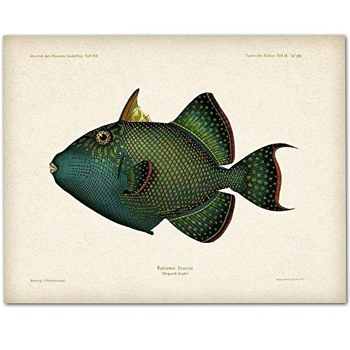 Blue Trigger Fish Artwork - 11x14 Unframed Art Print - Great Beach House Decor