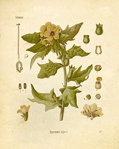 home, kitchen, wall art,  posters, prints 6 on sale Botanical Prints Vintage Wall Art Magical Herbalism Witchcraft in USA