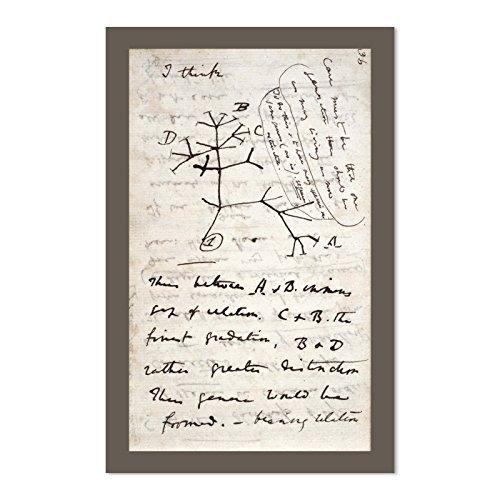 EvolveFISH Darwin's Tree of Life 11