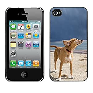 YiPhone /// Prima de resorte delgada de la cubierta del caso de Shell Armor - Cool Summer Dog Chilling - Apple iPhone 4 / 4S