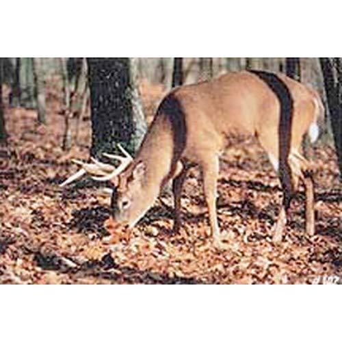 Tru-Life Paper Targets - Deer Feeding