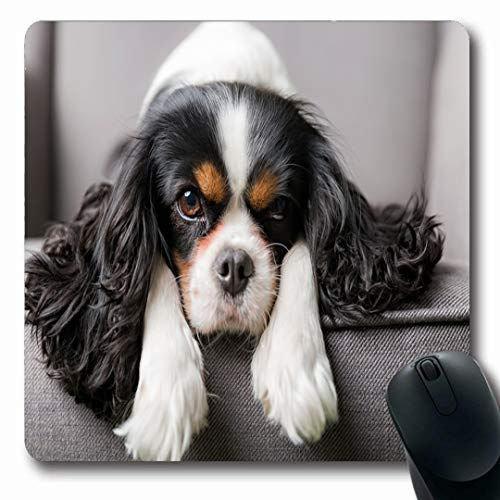 Ahawoso Mousepads Brown Dog Cute Cavalier Spaniel Fluffy Charles Puppy Grey Black Canine Pet Oblong Shape 7.9 x 9.5 Inches Non-Slip Gaming Mouse Pad Rubber Oblong Mat