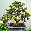 Mapplegreen Mandarin Orange Bonsai Edible Fruit Bonsai Tree Citrus Bonsai Bonsai Healthy Food Home Garden Easy To Grow 30 Pcs