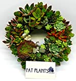Fat Plants San Diego 8 Inch Holiday Living Succulent Wreath