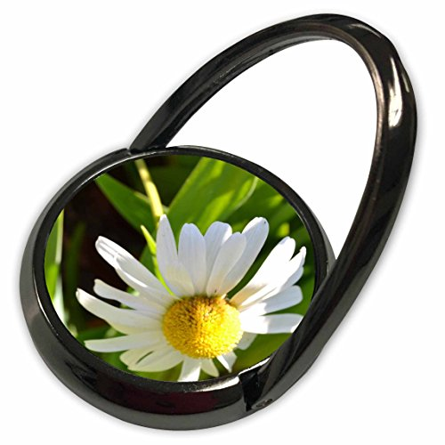 3dRose Patricia Sanders Flowers - Daisy Stretch - Phone Ring - Ring Daisy Stretch
