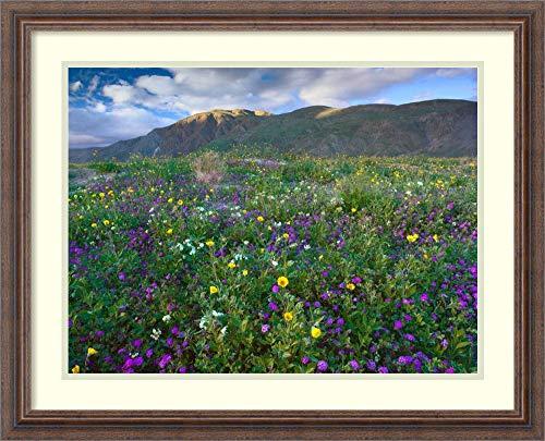 Framed Wall Art Print Wildflowers Carpeting The Ground Beneath Coyote Peak Anza Borrego Desert California by Tim Fitzharris 26.25 x 21.25 (Anza Borrego Wildflowers Best Time)