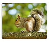 MSD Mousepad Gray Squirrel Sciurus carolinensis Image 35446193 Customized Tablemats Stain Resistance Collector Kit Kitchen Table Top DeskDrink Customized Stain Resistance Collector Kit K