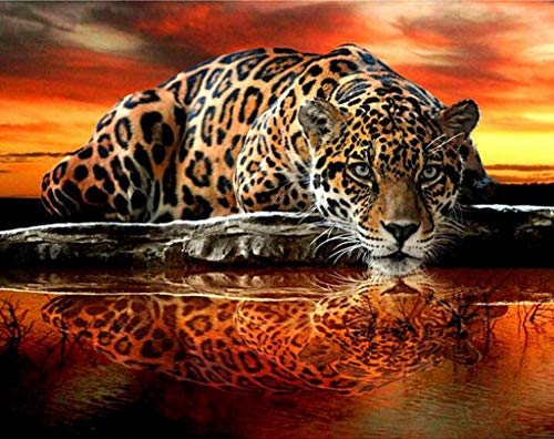 (DIY Handwork Store 5D Diamond Painting Full Square Orange Cross Stitch Animal Embroidery Mosaic Crystal Rhinestones Art Craft Gift Leopard Reflection Tiger Wall Stickers Home Decor(19.69