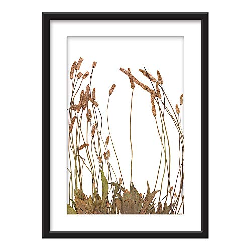 Framed Dried Plant Specimen Art in Black Picture Frames White Matting